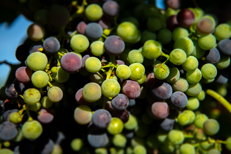 El Vino, antioxidante natural